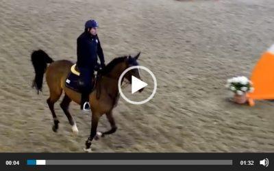 Nuovo giovane cavallo